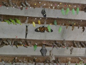 Butterfly-farm in Mindo